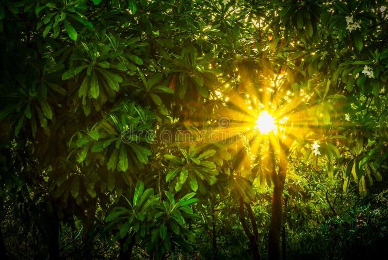 Paso del haz de Sun a través de la hoja verde imagenes de archivo