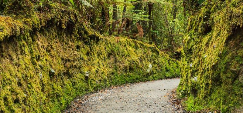 Paso verde claro fresco colorido en el parque, ruta del musgo del rastro de la calzada del liquen que camina en el lago Matheson, foto de archivo libre de regalías
