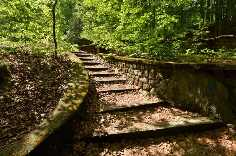 Pasos concretos en el bosque foto de archivo libre de regalías