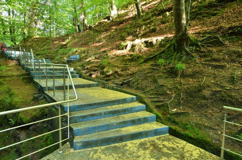 Pasos concretos en el bosque fotos de archivo