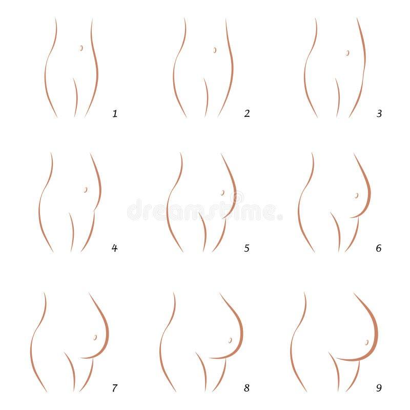 Pasos de la secuencia nueve del vientre del crecimiento del embarazo stock de ilustración