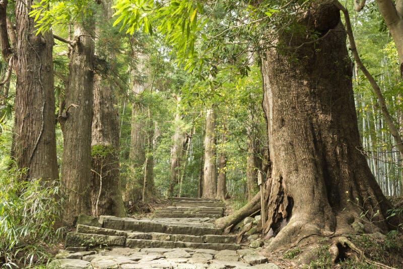 Pasos de piedra y árboles imagen de archivo