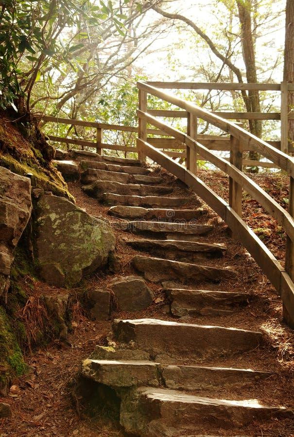 Pasos de progresión de piedra de la escalera en bosque de la naturaleza imagen de archivo libre de regalías