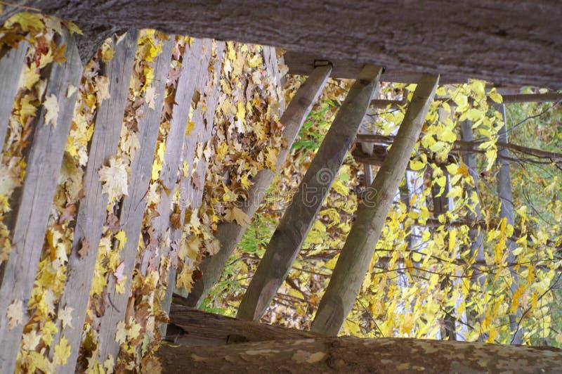 Pasos de progresión del otoño foto de archivo