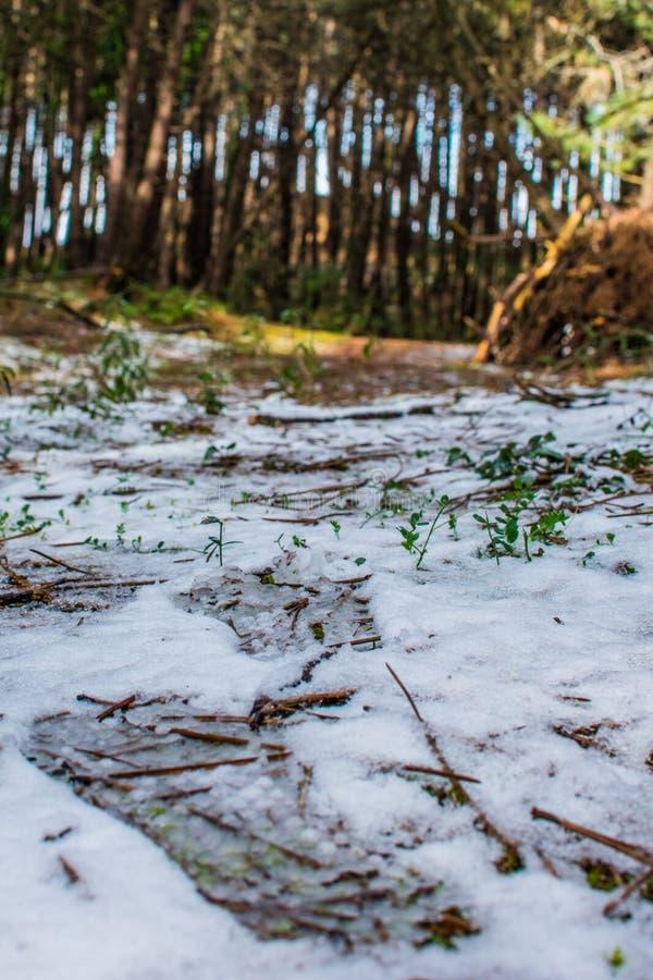 Pasos de progresión en la nieve foto de archivo