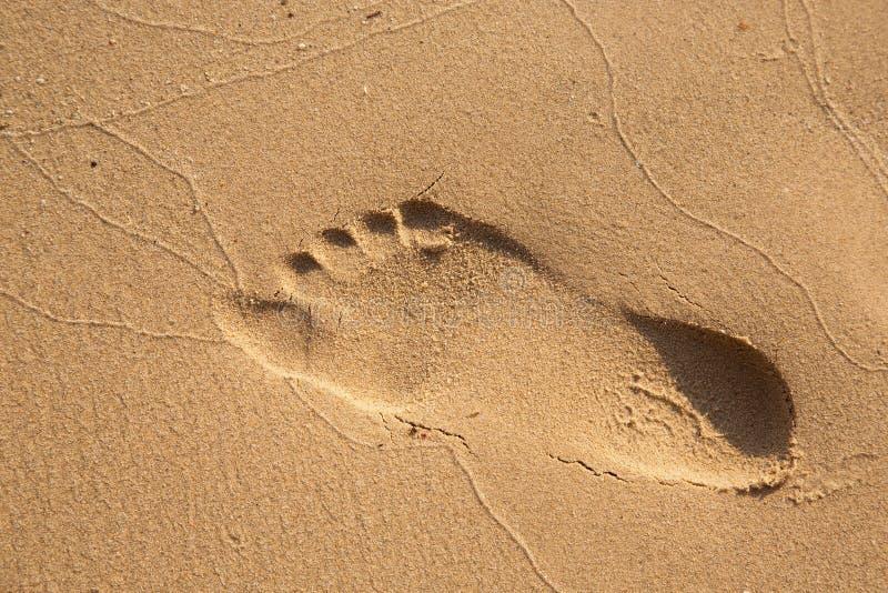 Download Pasos En Arenoso En La Playa Foto de archivo - Imagen de bañista, travieso: 42430758