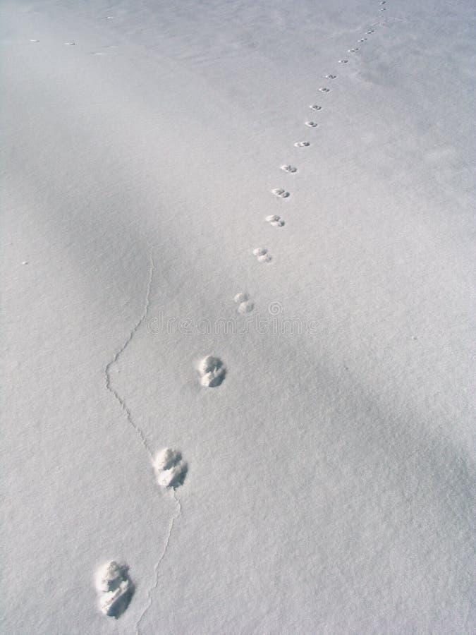 Download Pasos en la nieve imagen de archivo. Imagen de nevoso - 7284433