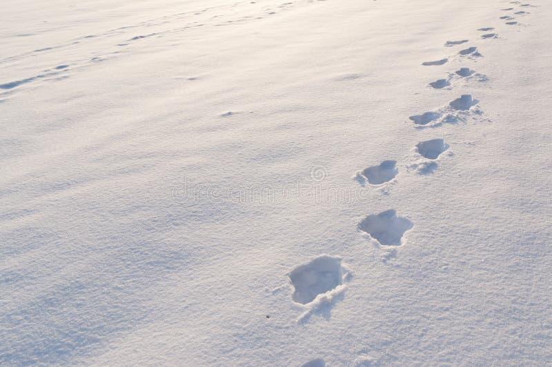 Pasos en nieve fotos de archivo libres de regalías