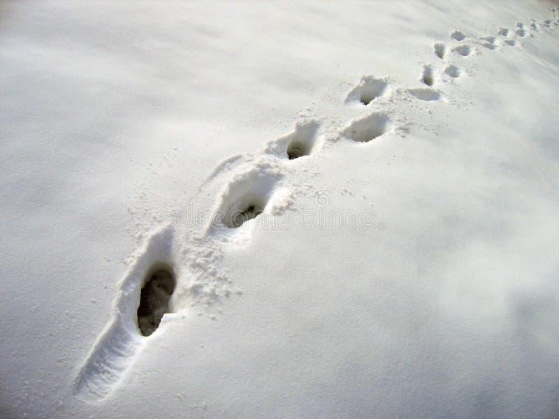 Pasos En Nieve Fotos de archivo