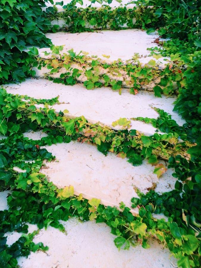 Pasos herbosos foto de archivo
