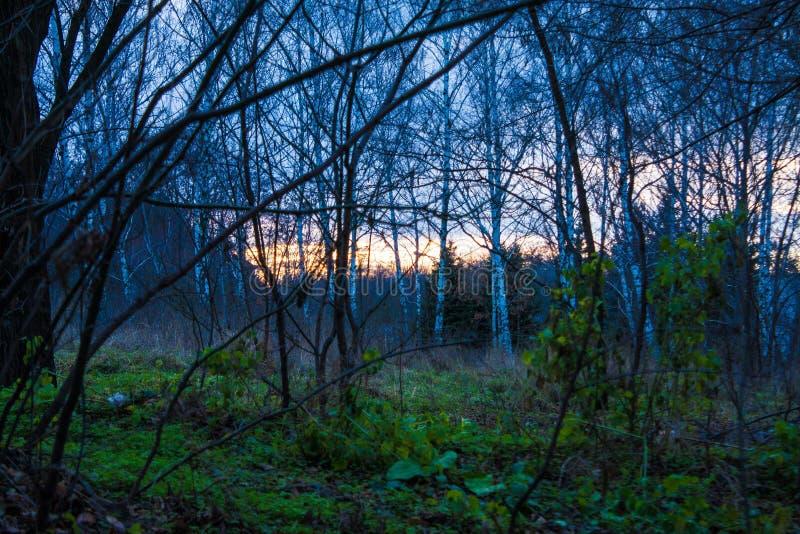 Pasos misteriosos en la selva virgen foto de archivo