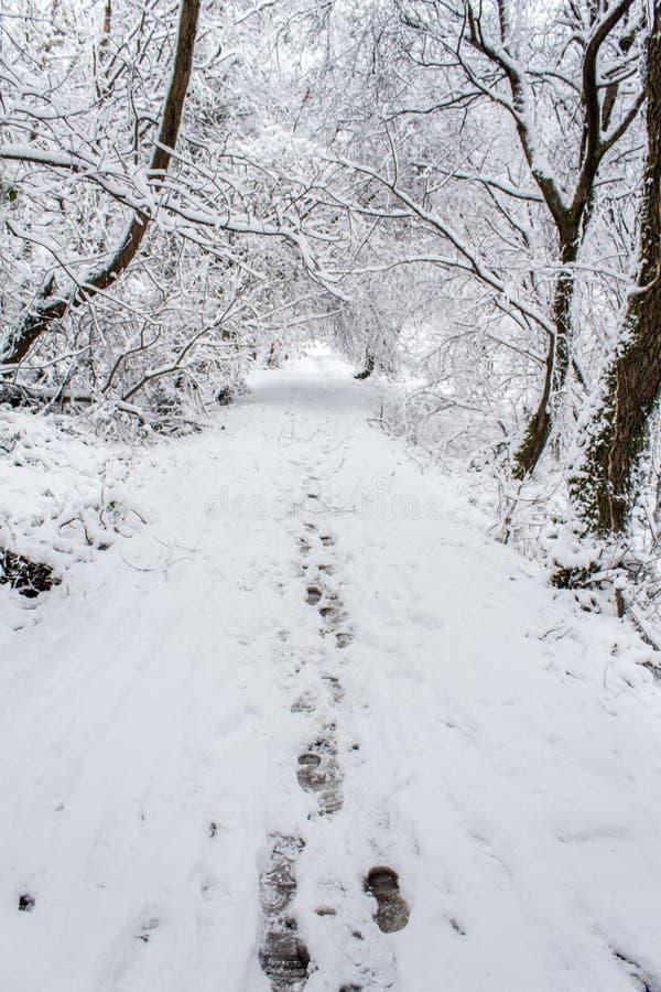 Pasos a través de la nieve foto de archivo libre de regalías