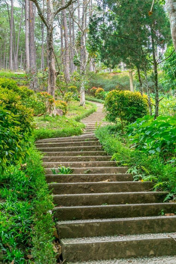 Pasos a una colina en un parque con el césped verde en los bordes imágenes de archivo libres de regalías