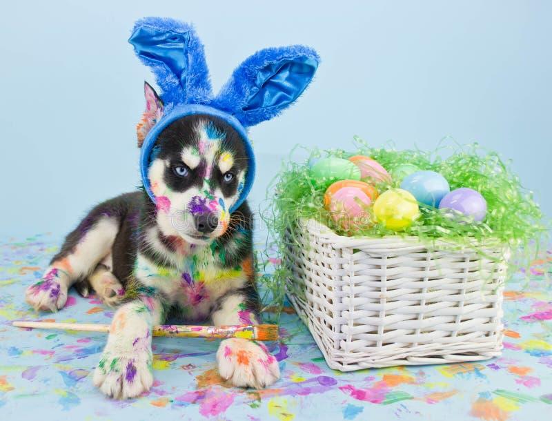 Pasqua Husky Puppy fotografia stock libera da diritti
