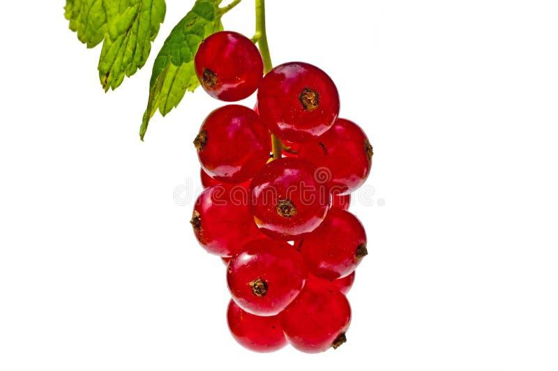 Passa de Corinto vermelha imagens de stock royalty free