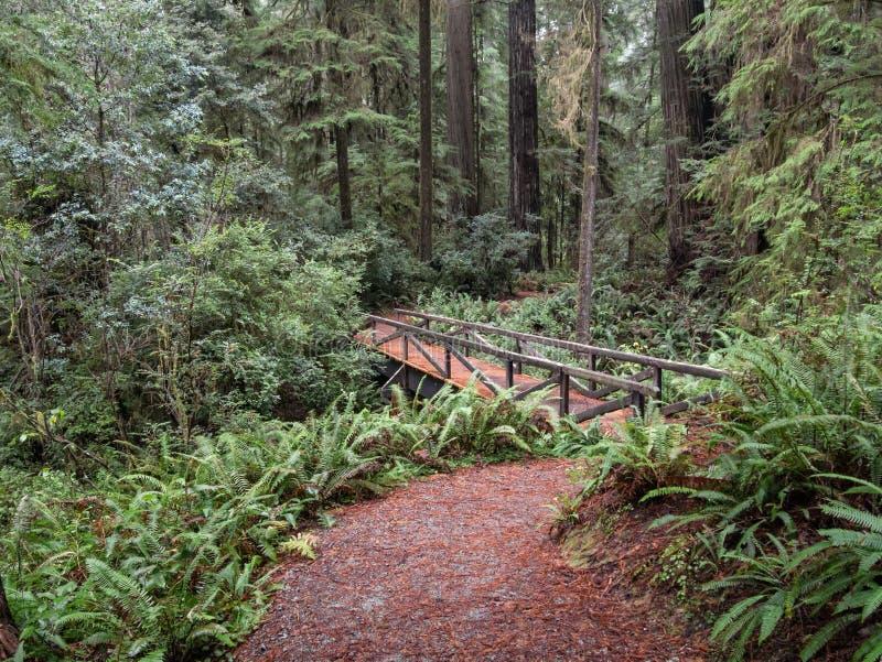 Passadiço da floresta da sequoia vermelha imagens de stock