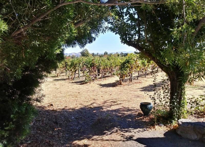 Passage aux vignes photographie stock libre de droits