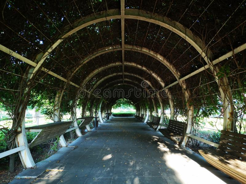 Passage being covered with wistaria plant royalty free stock photos