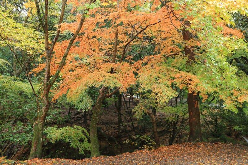 Passage couvert à Kasuga Taisha à Nara, Japon image libre de droits