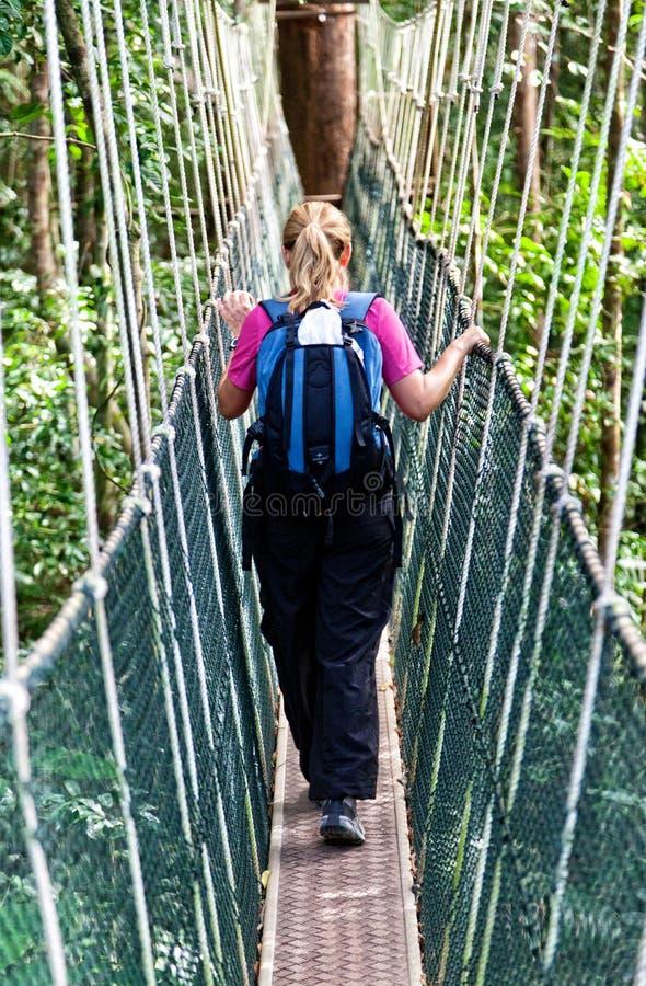 Passage couvert Bornéo d'auvent photo stock