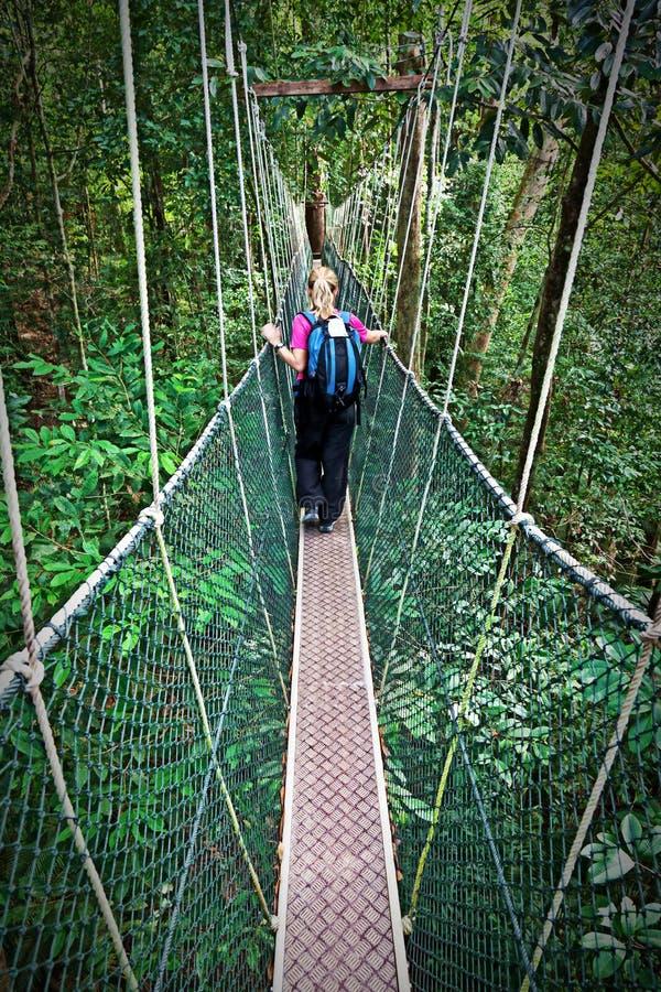Passage couvert Bornéo d'auvent images libres de droits