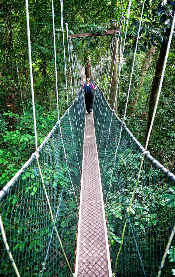 Passage couvert Bornéo d'auvent images stock
