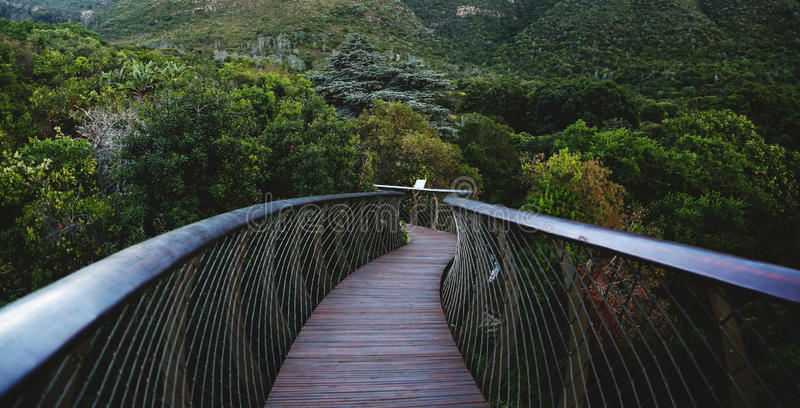 Passage couvert centenaire de voûte de Kirstenbosch photos stock