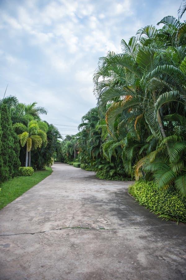 Passage couvert concret et arbre vert photographie stock libre de droits