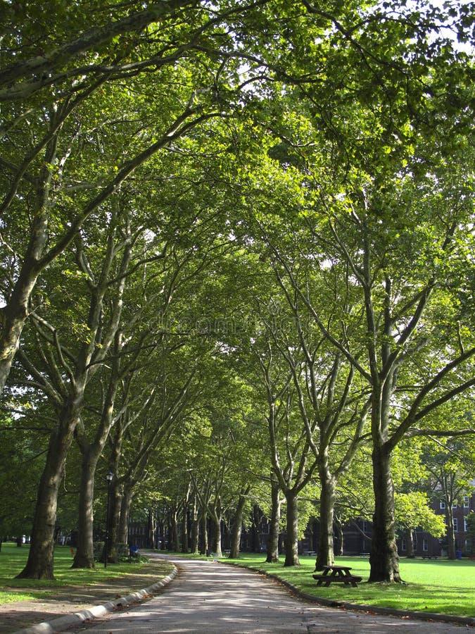 Passage couvert délimité par des arbres images stock