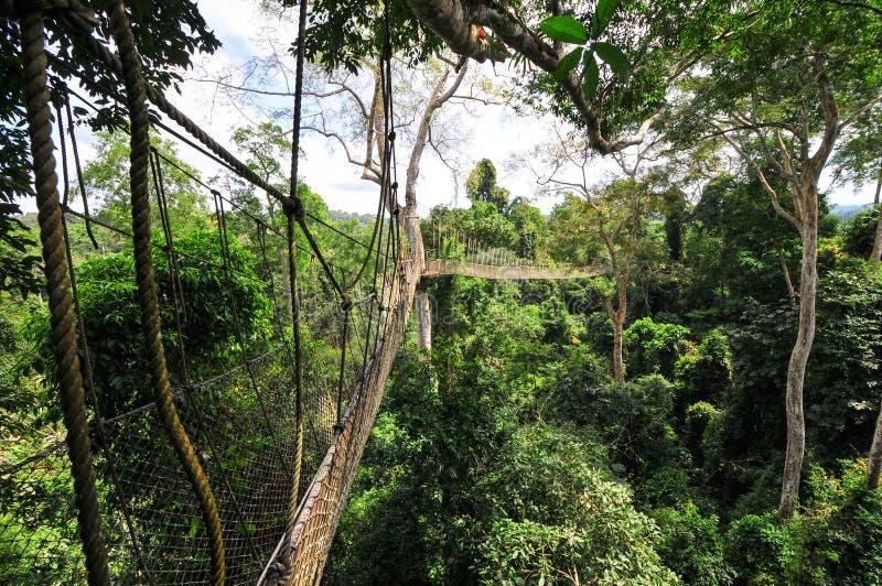 Passage couvert d'auvent de parc national de Kakum photos stock