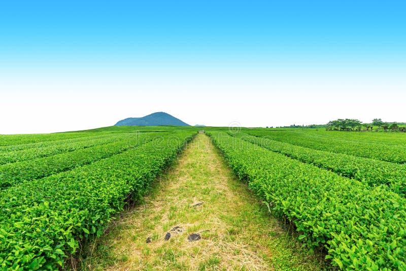 Passage couvert dans la ferme de thé image libre de droits