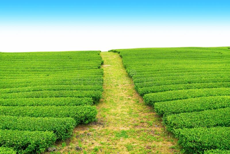 Passage couvert dans la ferme de thé photographie stock libre de droits