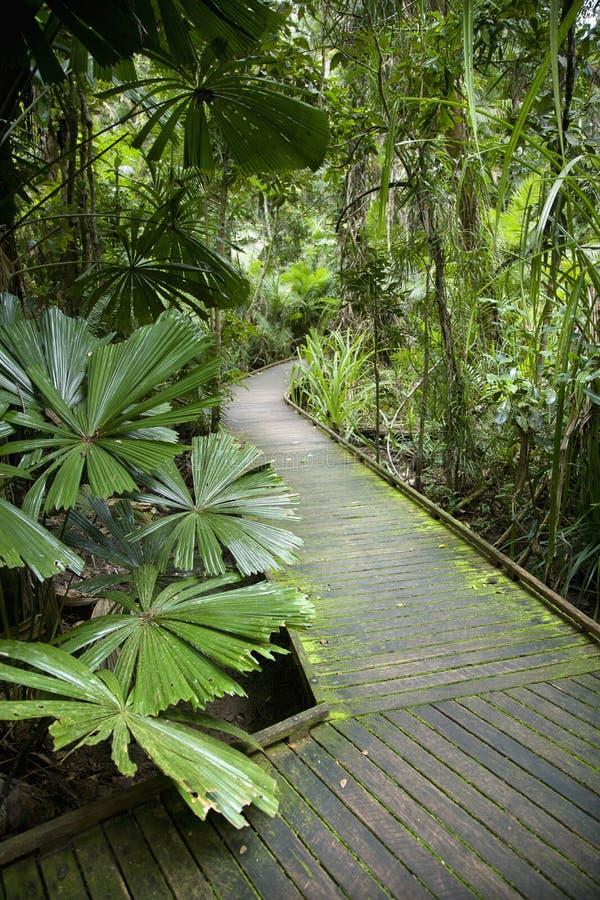 Passage Couvert Dans La Forêt Humide. Image stock