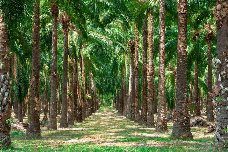 Passage couvert dans le jardin de palmier. photos libres de droits