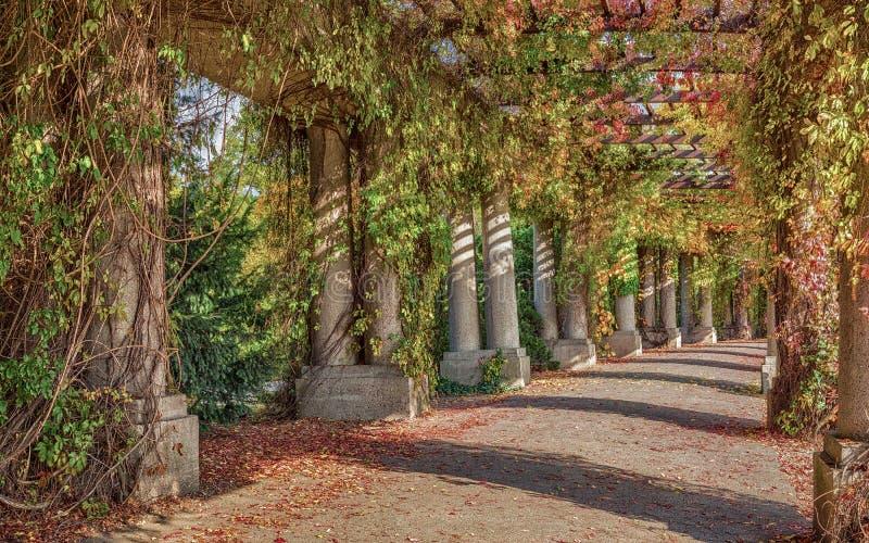 Passage couvert de pergola en parc images libres de droits