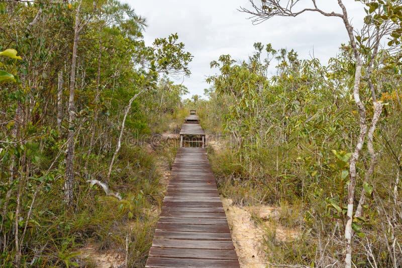 Passage couvert en bois dans la forêt image stock