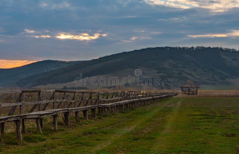 Passage couvert en bois de lever de soleil sec vers le haut du marais photographie stock libre de droits
