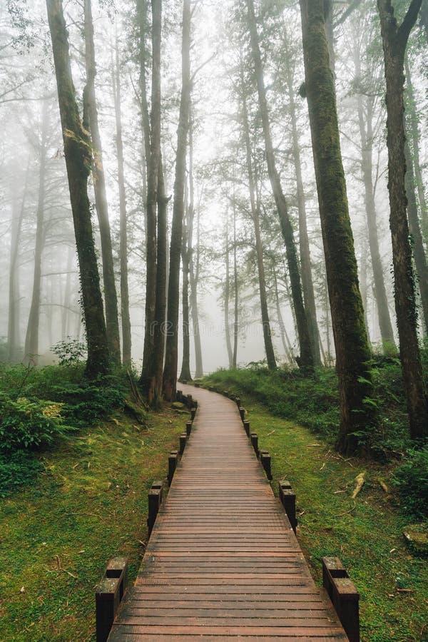 Passage couvert en bois qui mène aux arbres de cèdre dans la forêt avec le brouillard dans Alishan Forest Recreation Area nationa photographie stock libre de droits