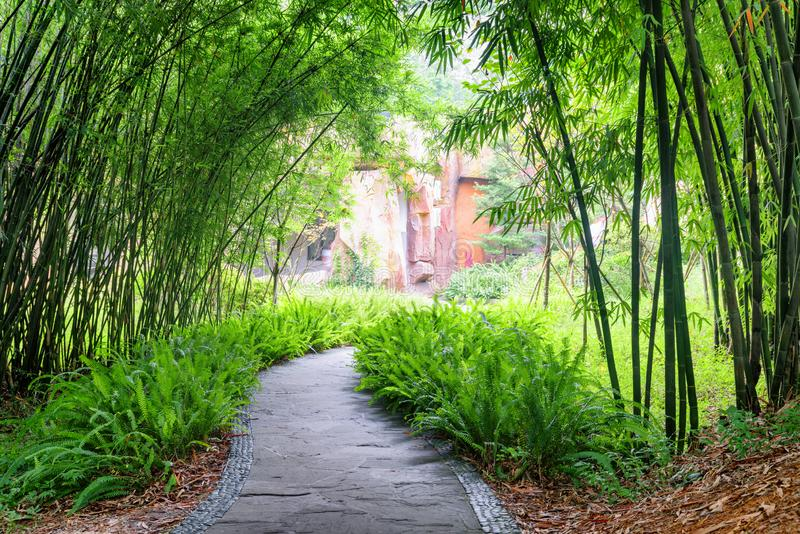 Passage couvert en pierre parmi des fougères et des arbres en bambou verts en parc image libre de droits