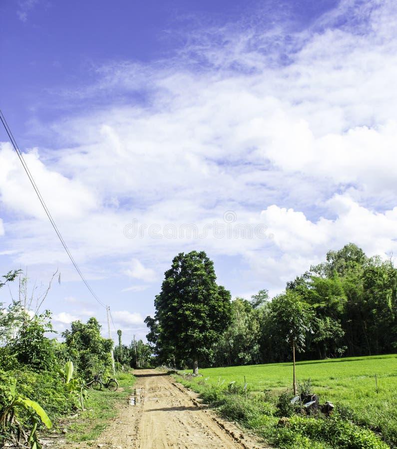Passage couvert rustique un arbre et un beau ciel photographie stock libre de droits