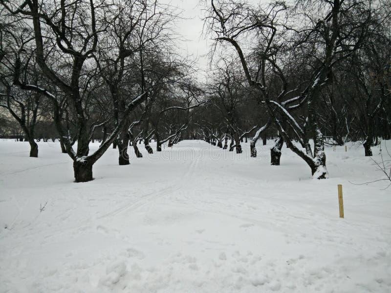 Passage d'hiver photos stock
