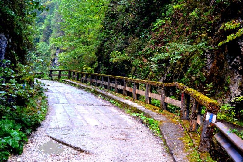 Passage d'Odancusei Paysage en montagnes d'Apuseni, la Transylvanie images stock