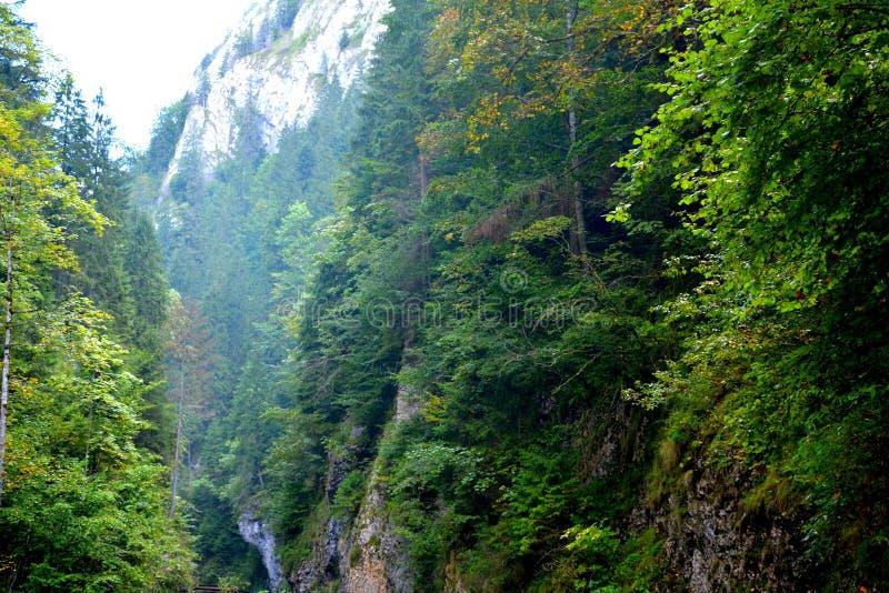Passage d'Odancusii en montagnes d'Apuseni, la Transylvanie photographie stock libre de droits