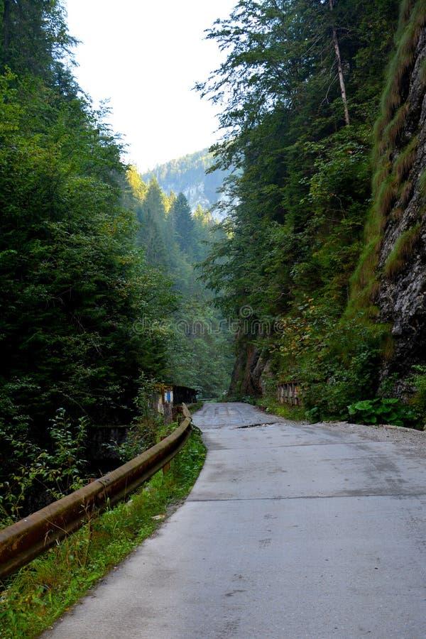 Passage d'Odancusii en montagnes d'Apuseni, la Transylvanie photographie stock