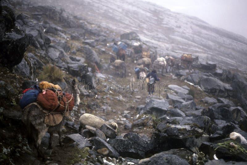 Passage des Andes de croisement de train de mule photo libre de droits