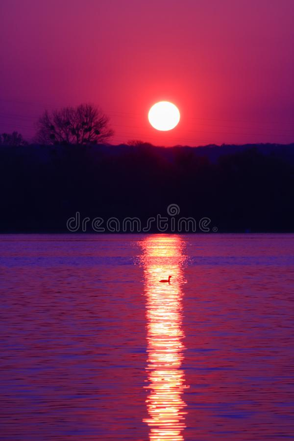 Sunrise in close-up with an isolated tree royalty free stock photography