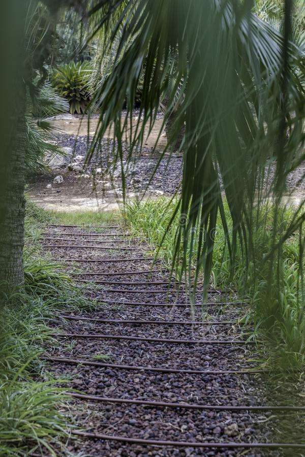 Passage in the garden with gravel. Passage in the lush green tropical garden with grass trees and bushes gravel and irrigation pipes royalty free stock photo