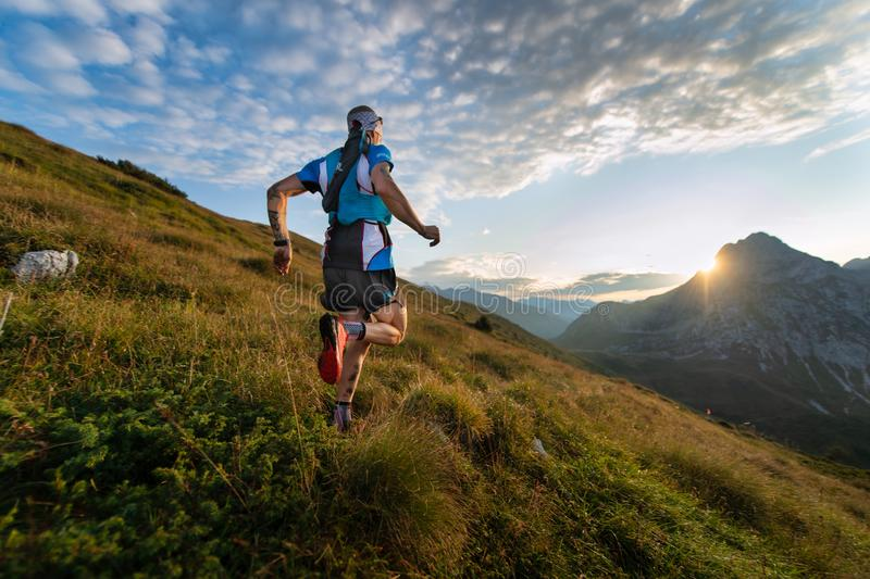 Passage Of Mountain Runner on Meadow stock image