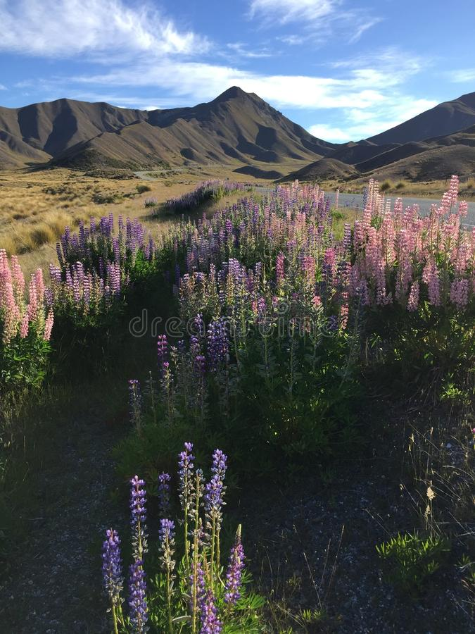 Passage Nouvelle-Zélande de Lindis photos libres de droits