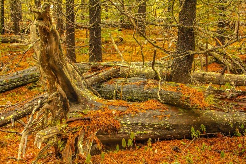 Passage vermeil, parc national de Banff, Alberta, Canada images libres de droits